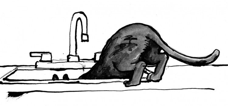 The Critter in the Kitchen Sink